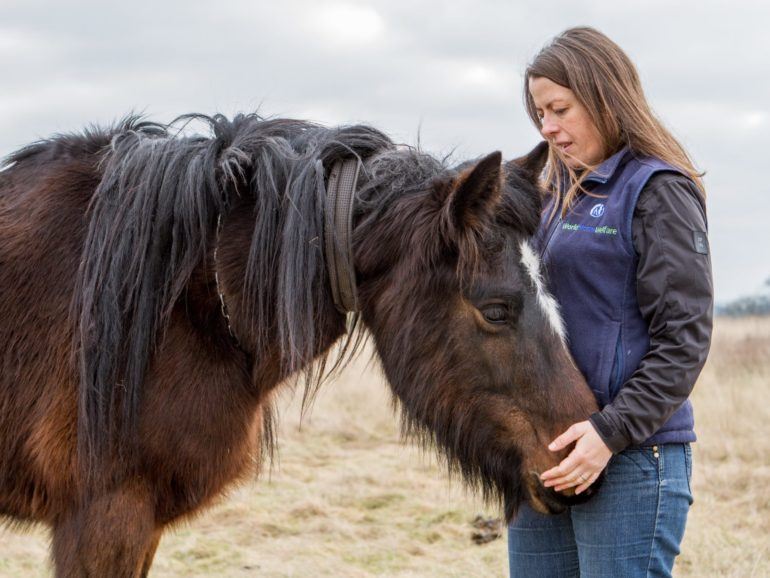 World Horse Welfare ventures onto the airwaves for the 1st time