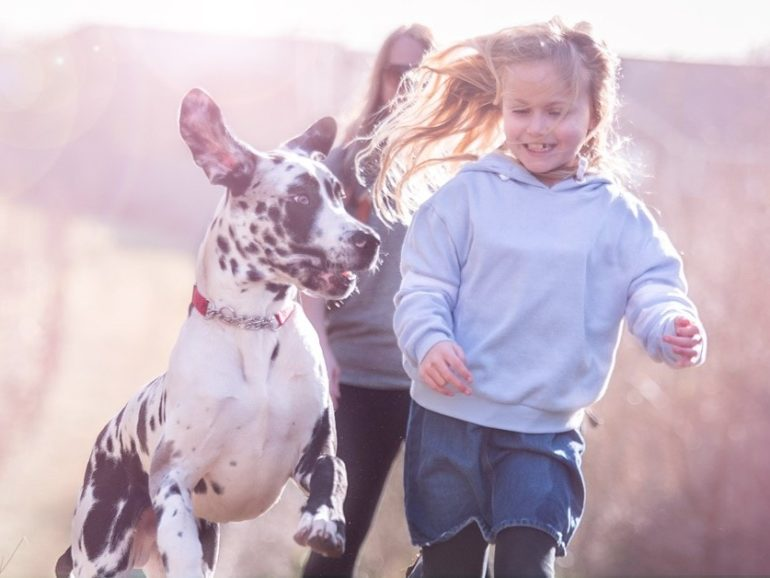We are delighted to be partnering with Animal Friends Insurance